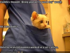 funny-pictures-kitten-visits-vet