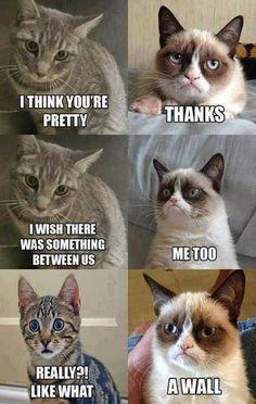 Grumpy Cat Quotes Funniest Grumpy Cat Quotes