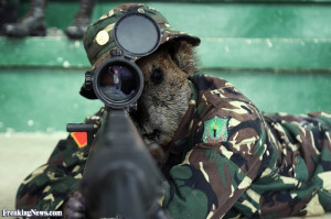 Funny Army Sniper Groundhog