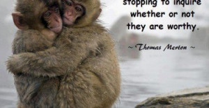 Cute Monkey Quotes and Sayings