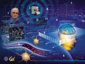 Studio rivela come attivita' cerebrale e' scandita diversamente ...