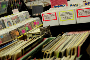 Record Store Kitty by thomasmperry on Flickr