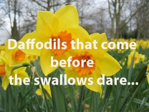 Image for Shakespeare quote, Daffodils that come before the swallowsa ...