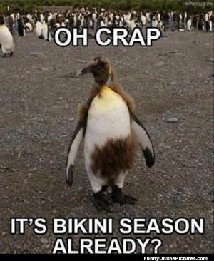 Funny animal meme picture of a penguin for forgot about bikini season!