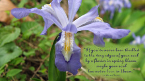 Quotes About Flowers Blooming. Quotes About Power And Control. View ...