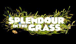 splendour-in-the-grass.jpeg