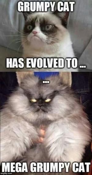 Grumpy Cat Lovers' Mega Compilation (21 Pics)