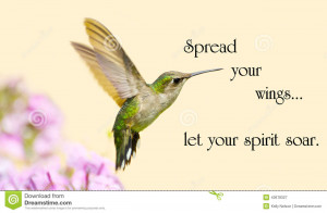 Inspirational quote on life with a beautiful ruby throated hummingbird ...