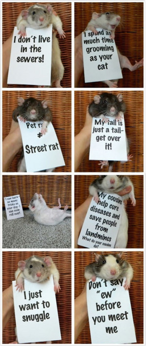 Rats Are Misunderstood