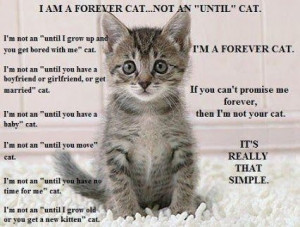 If you can't promise me forever, then I'm not your cat. - Google+