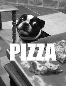 DOG-PIZZA-life-eyes-love-at-first-sight-cheesy-quotes-photo-glossy-t ...