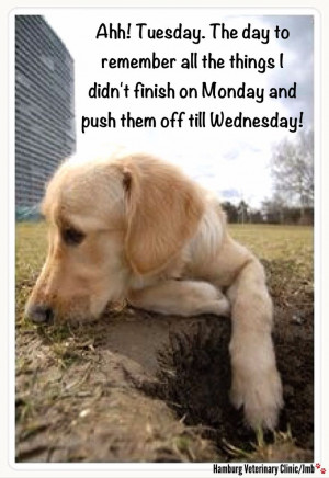 Tuesday funny | Animal humor | Cute dog | Putting things off till ...
