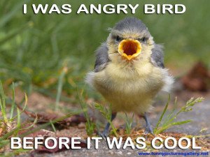 Funny bird pictures with captions – Funny Picture bird screaming ...