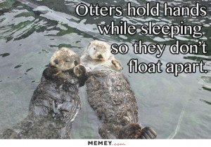 funny cute otters