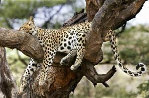 Wild Animals Wild Animals