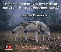 Native American Quotes About Nature 827aa2c2d593a9d8673d2fa616164c ...