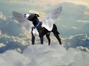 all_dogs_go_to_heaven_by_thereapersapprentice-d4uixs4.jpg