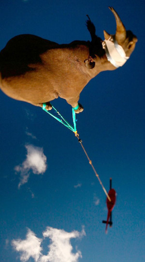 Funny photos funny rhino helicopter rope