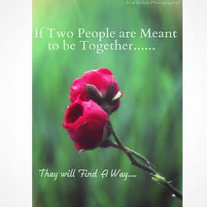 rose roses quotes flowers flower TagsForLikes petal petals