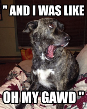 Funny dog face meme - photo#39