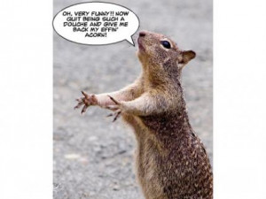 funny squirrel pictures with captions, funny squirrel Pictures , funny ...