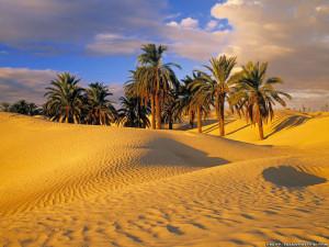 desert-oasis-tunisia-desert-view-hd-wallpaper-1024-x-768.jpg