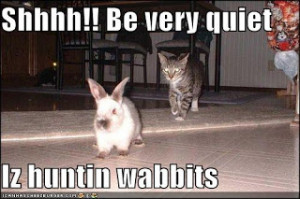 Funny rabbit, funny rabbit pictures, pictures of rabbits