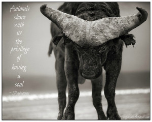 Picture Quotes Collection | Vegan Diet and Animal Welfare » Veganism ...