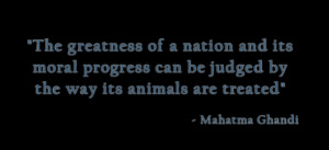 Gandhi Quotes Society Animals ~ About The Animal Show: Helping Animals ...