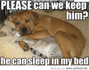 Cute Funny Puppy Quotes Cute Puppy Attack Quotes