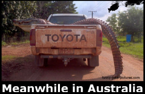 Hilarious Meanwhile In Australia Crocodile Alligator Joke Picture