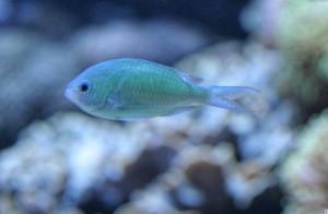 underwater sea animals