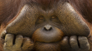 animals nice funny monkey picture
