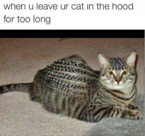 when you leave your cat in the hood too long