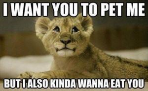 Animal love funny 30 Funny animal captions - part 14 (30 pics)