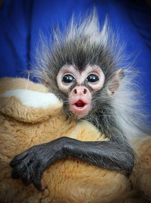 Funny Bad Hair Day Sayings Bad hair day! found on scontent-a.xx.fbcdn ...