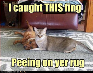 funny cats and dogs, peeing on the carpet