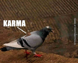 Funny Pictures - Karma - Pigeon with shit on it