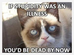 Grumpy Cat Sunday