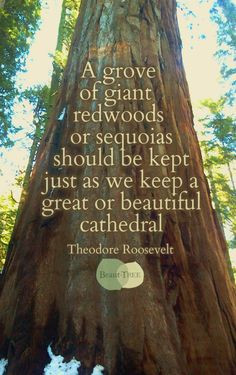... we keep a great or beautiful cathedral - Teddy Roosevelt #quote More