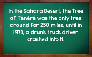 ... funny truck driver quotes and sayings the life of the truck driver