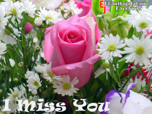 Miss You in Cute Rose Flower New Images 2013