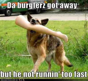 Some funny GSD pics I wanted to share!-imageuploadedbypg ...