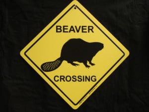 ENLARGE - Beaver Crossing Sign - Funny Cute Canada Lake Creek River ...