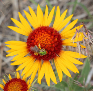 Flowers and Insects are spiritual presences who are here to inspire us ...
