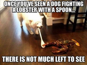 funny-picture-dog-lobster-fight