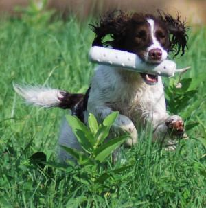 Hunting Dog Breeds Raised