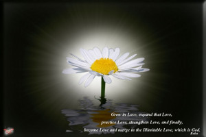 ... Loving God: Quotes About Loving God And The Picture Of Lily Flower
