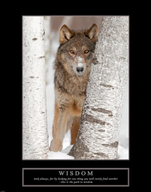Photography > Animal Photography > Wolf Photography : Art Prints ...