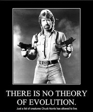 Chuck Norris Quotes and Jokes